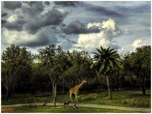«Под небом Африки моей…»