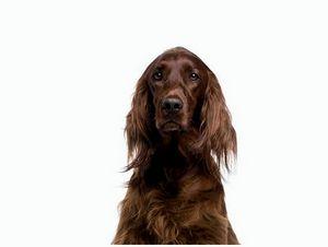 Президенту Росохотрыболовсоюза от экспертов охотничьего собаководства