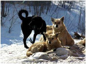 Проблема бродячих собак