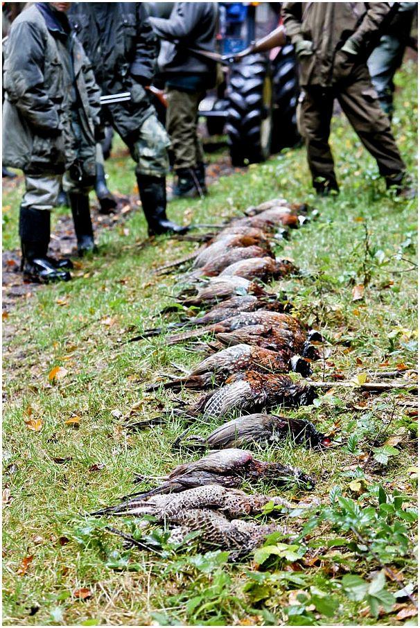 Российский охотничий союз три года спустя