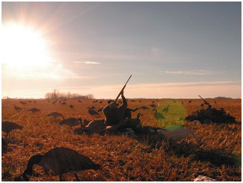 Русская охота: камо грядеши?