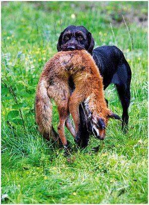 Собака – душа охоты