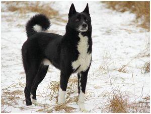 В защиту  охотника  с собакой  без документов