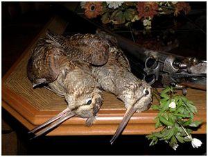 Вальдшнеп: слагаемые удачного выстрела