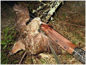 Весенняя охота в Калужской области
