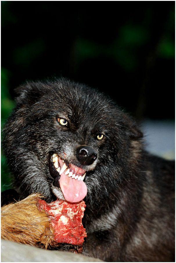 Заболевания зубов и ротовой полости у собак