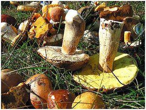 Засушливое лето – грибная осень