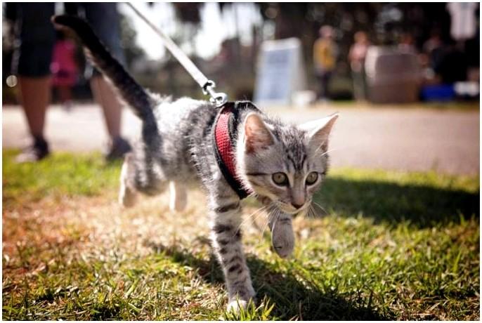 Поход с кошками: как взять с собой кошку в приключение