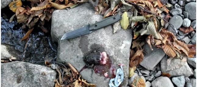 Ловля лягушек и жаб. Способы приготовления и употребления в пищу лягушек и жаб.