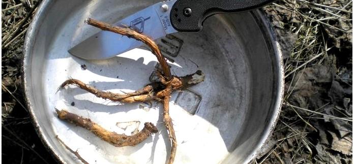 Приготовление кофе из корней одуванчика, кофейный напиток из корней одуванчика, рецепт и особенности приготовления в полевых условиях.