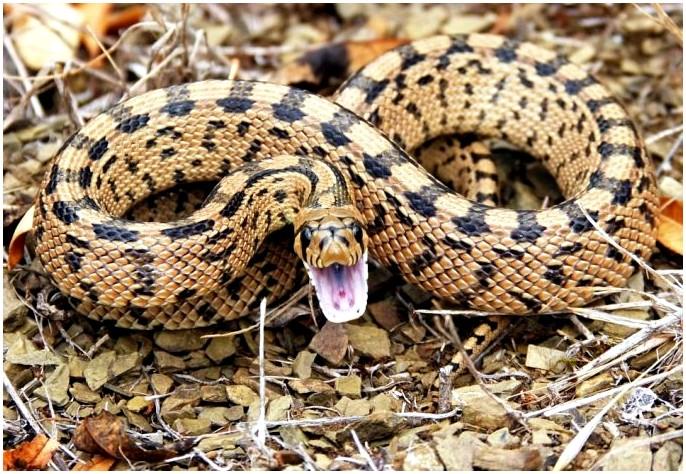 Первая помощь при укусе змеи: вещи, которые вы можете сделать вместо паники