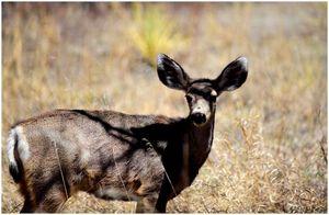 Best Deer Call: Привет, олень то, что вы ищете?