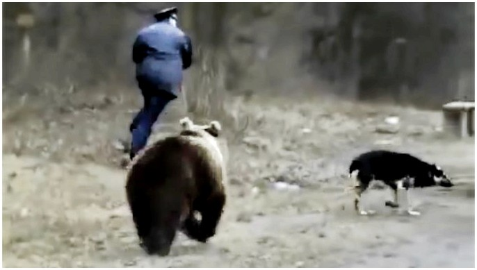 Как держать медведей подальше от лагеря: правильные способы проверить свой лагерь