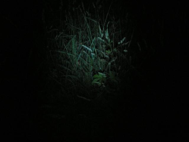 Впечатления от фонаря Inova Bolt, 3.8 W White LED, 2 AA и модернизация фонаря MAG-LITE Mini Maglite, обзор.