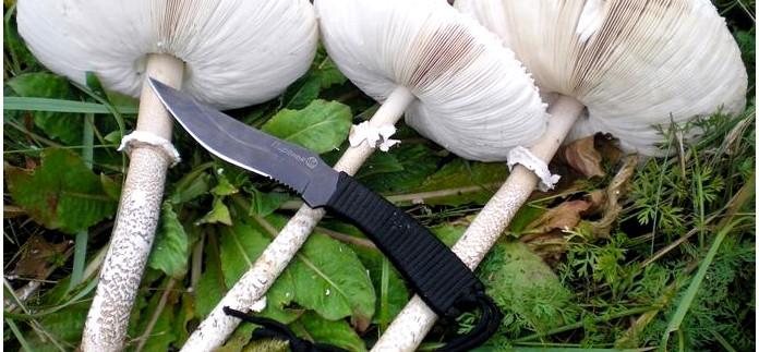 Гриб-зонтик пестрый, большой, высокий, Macrolepiota procera, приготовление гриба-зонтика в пищу, отбивные из грибов-зонтиков.