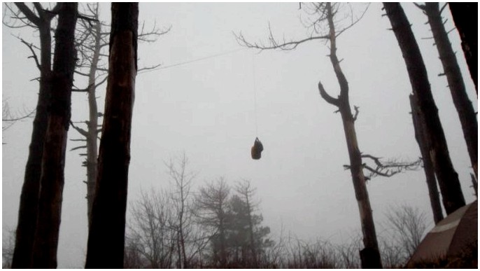 Как повесить мешок с медведями: лучшие способы сохранить еду во время кемпинга