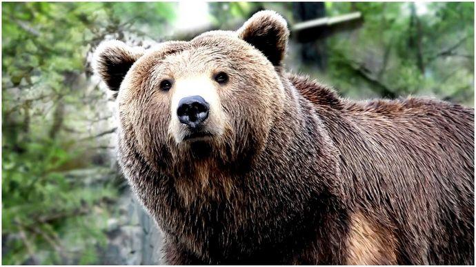 Как охотиться на медведя: обязательные советы по охоте на медведя, которые могут сделать вашу охоту успешной