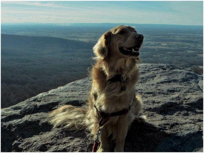 Рюкзаком с собаками: прогулка по дикой стороне
