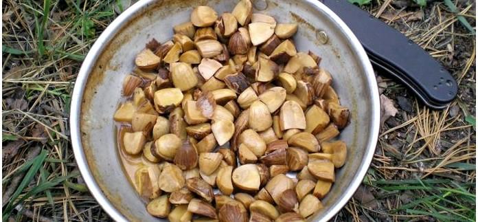 Рецепт приготовления хлеба и лепешек из дубовых желудей, желудевая мука и ее приготовление в полевых условиях.