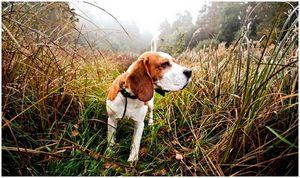 Кроличьи охотничьи собаки: обучены ловить хвостики