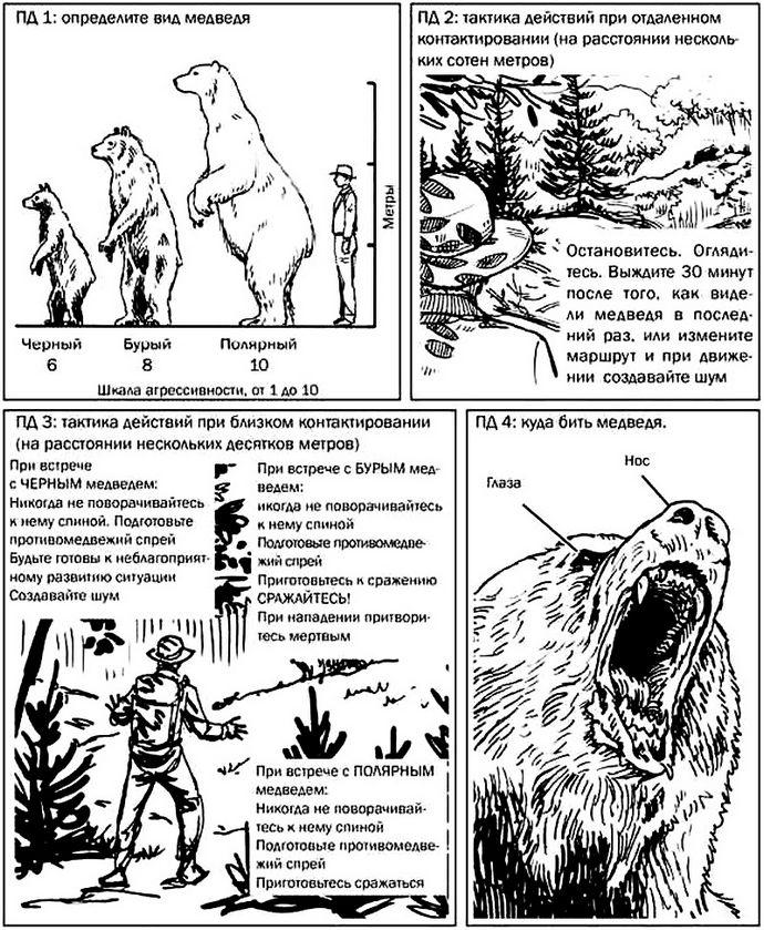 Что делать при нападении и атаке медведя, обычные меры предосторожности, как предотвратить нападение медведя, использование противомедвежьего спрея и оружия.