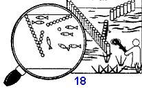 Самодельные ловушки для рыбы, загоны, садки, карманы, плотины, деревянные сети для ловли рыбы при выживании в аварийной ситуации, изготовление, загон и сбор рыбы.