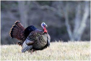 Турция охота осенью: секреты пожирателей
