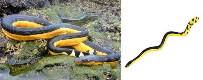 Морские змеи, опасность для человека, симптомы после укуса, виды укусов и места обитания морских змей.