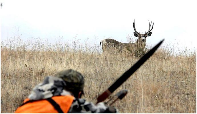 Вещи, которые вы должны знать о том, где стрелять в оленя