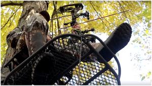 Охота с луком стоит: как деревья стоят как профессионал