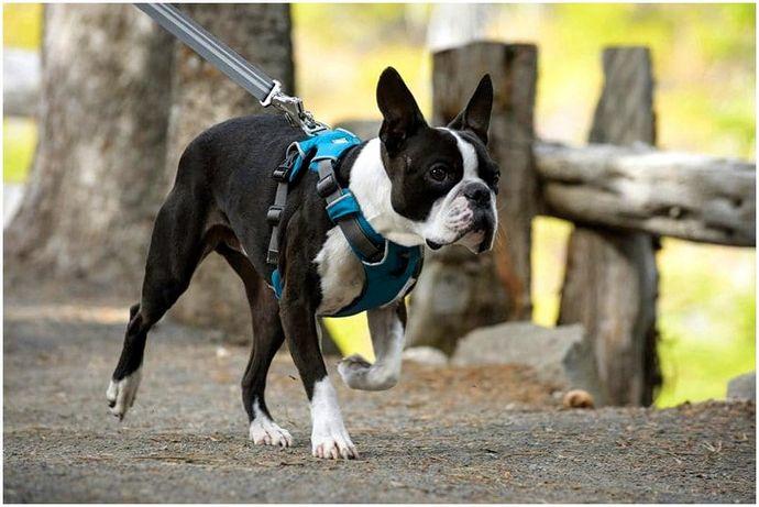 Лучшее снаряжение для рюкзака для собак: отправляйтесь на трассу со своим щенком
