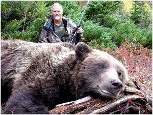 Советы по охоте на медведя гризли: захват бурого медведя