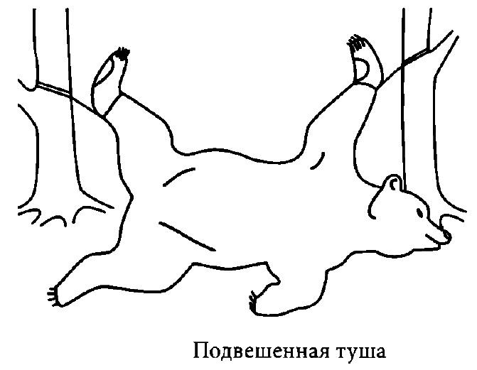 Съемка шкуры ковром, порядок и последовательность действий, снятие шкуры на конечностях и с головы.