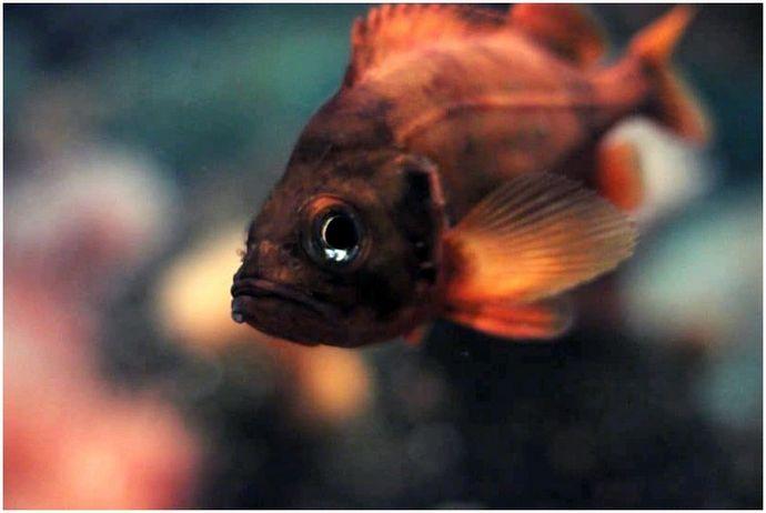 Как поймать Redfish: Jiggety-Jig