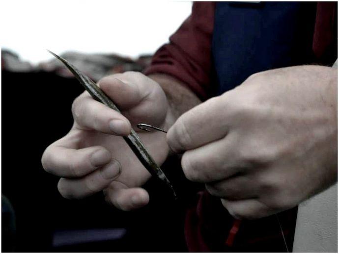 Как поймать полосатого окуня: варианты наживки и профессиональный совет