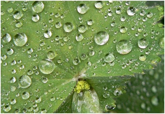 Как выжить на природе ни с чем: ваш главный гид