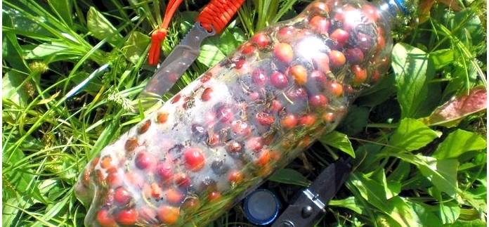 Ягодные вина, получение винных дрожжей в домашних условиях, рецепты ягодных вин из ягод черной бузины и шиповника.