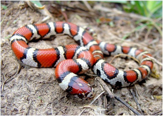 Как поймать змею: не дай ей сбежать