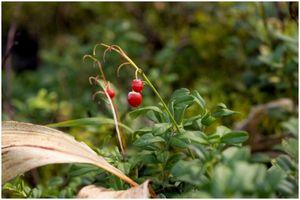 Как найти еду в природе: научиться находить пищу в условиях выживания