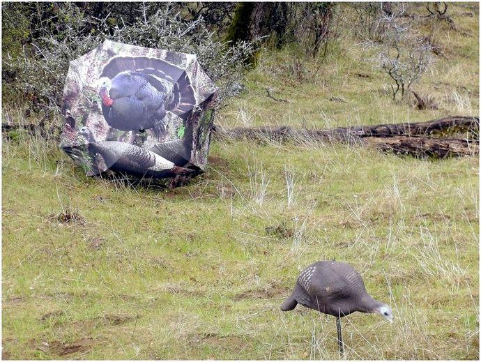 Охота на индеек под дождем: максимально использовать плохую погоду