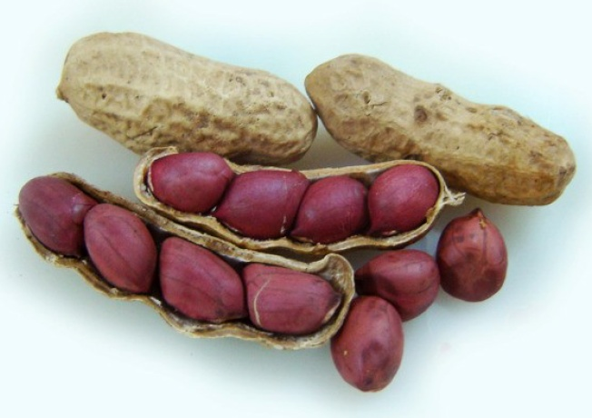Арахис или земляной орех, полезные свойства, рецепт ликера из арахиса на виски.