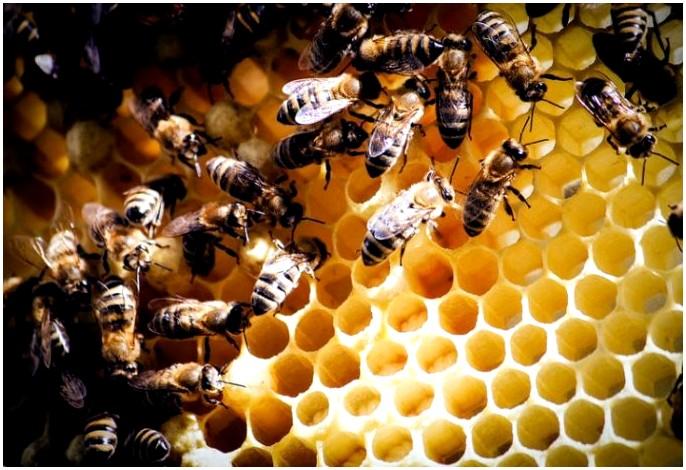 Средства от укуса пчелы: не позволяйте вашему укусу быть жестким