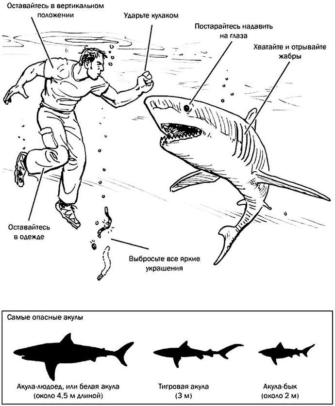 Что делать при нападении акул, несколько кратких советов для неподготовленного человека, какие самые опасные акулы.