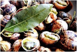 Съедобные улитки: как их найти, приготовить и съесть