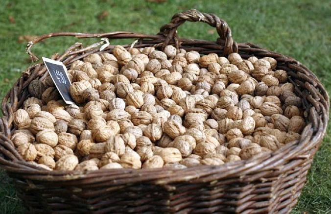 Грецкий орех, полезные свойства, рецепты ликера и настоек из грецкого ореха и перегородок грецкого ореха.