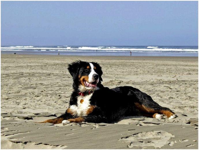 Походные собаки: лучшие компаньоны Слоббери