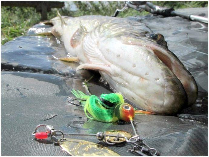 Spinner Fishing Tips: максимально используйте каждый бросок