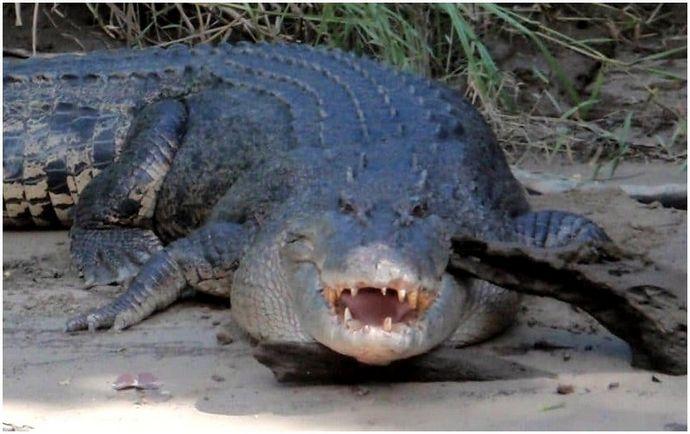 Планирование провести некоторое время на природе: научиться избегать нападений диких животных