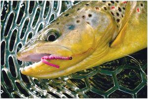 Лучшая форелевая приманка: пустынная рыбалка