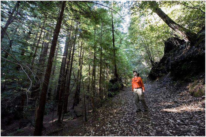 Выживание в лесу: правильно смотреть в лицо матери-природе
